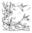 humming-birds and flowers vector image