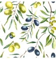 Watercolor olive branch background vector image vector image