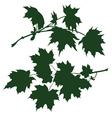 branch maple vector image