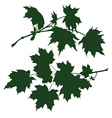 branch of maple vector image vector image