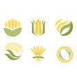 cereal ears and grains agriculture industry
