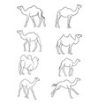 camel line art black white isolated vector image