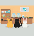 group pets in veterinary vector image vector image