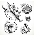 Set of sketches different shapes shell vector image vector image