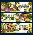 vegetables and farm food veggies banners vector image vector image