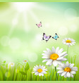 Daisies Summer Background vector image