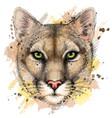 cougar color portrait a mountain lion vector image