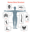 human skeleton and part set for card or poster vector image vector image