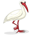 Ibis on white vector image vector image