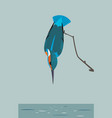 kingfisher is looking for prey in the river vector image vector image