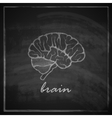 vintage of human brain on blackboard background vector image vector image