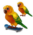Colorful sun conure parrot rides his skateboard