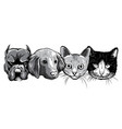 monochromatic cat and dog characters best friend vector image