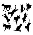 pet cat silhouettes vector image