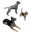 3d models dogs on white background vector image vector image