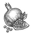 sketch pomegranate fruit pencil hatching vector image vector image
