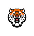tiger head logo icon vector image vector image