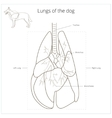Lungs of the dog vector image vector image