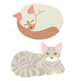 tabcat sleeping domestic cat home vector image vector image
