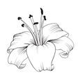 Blooming lily vector image vector image