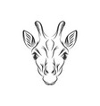 hand drawn giraffe designs vector image