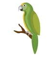 cute parrot bird isolated icon vector image