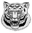 head of wild animal predator asian tiger face vector image vector image