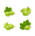 realistic detailed 3d gooseberries with green vector image vector image