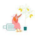 senior lady sitting on suitcase under lemon tree vector image