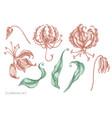 set hand drawn pastel gloriosa vector image vector image