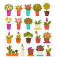 assortment of different flowers vector image