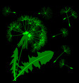 green blow dandelion silhouette isolated on black vector image