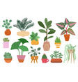 home plants isolated plant in pot planting ficus vector image vector image