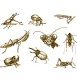 insect vector image