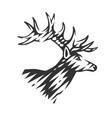 beautiful deer vector image vector image