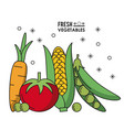 colorful poster fresh vegetables carrot tomato vector image