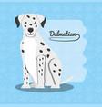 cute dogs design vector image