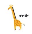 cute orange giraffe on white background vector image