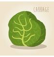 fresh cabbage vegetarian food vector image