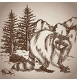 hand drawing raccoon landscape vintage vector image
