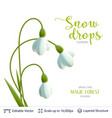 spring snowdrops on white vector image