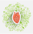 human heart concept about healthy lifestyle and vector image vector image