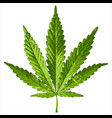 leaf cannabis vector image