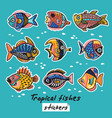 decorative tropical fishes set colorful vector image vector image