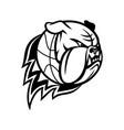head english bulldog or british bulldog vector image vector image