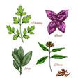 icons of spice seasonings herb flavorings vector image vector image