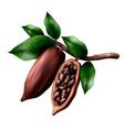realistic cocoa tree composition vector image vector image