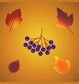 autumn leaf foliage icons of oak acorn maple or vector image vector image