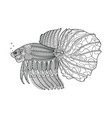 fighting fish hand drawn coloring page vector image vector image
