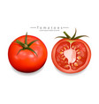 tomatoes sliced isolated realistic vector image vector image